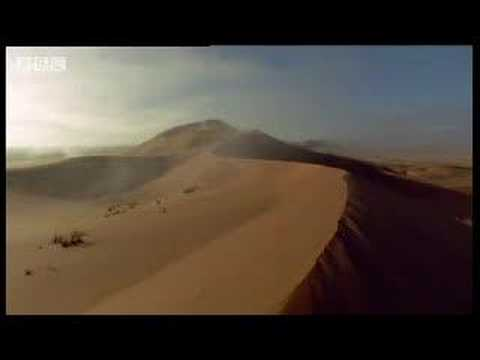 African beetles beat the heat in the Sahara desert - BBC wildlife