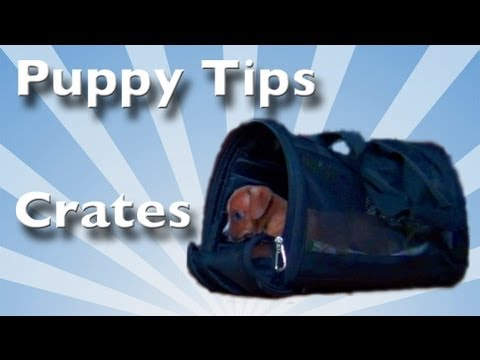 Puppy Tips 4- Crate Training - Clicker Dog Training