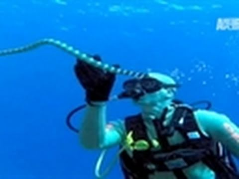 Wild Kingdom- Diving for Sea Snakes