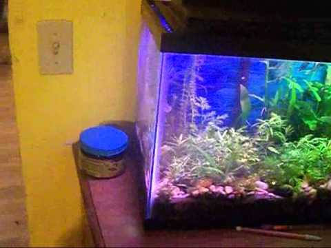 97 sub video the info is getting released.... again 125 gallon.