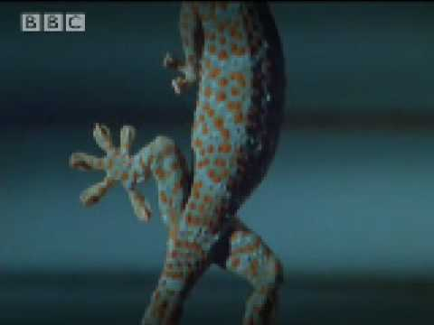 Curling toes & technological advances - Space Age Reptiles - BBC animals