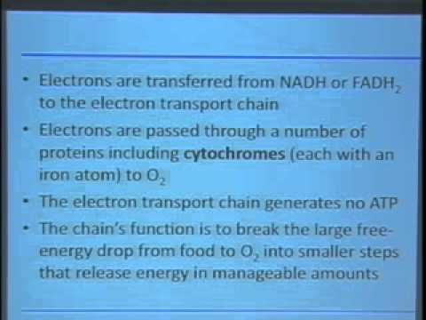 Saylor BIO101a: Cellular energy production and anaerobic processes I