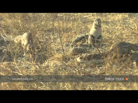 Arid Africa: Animals of the stony desert