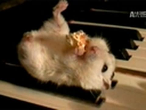 WTF- Mozart the Musical Hamster