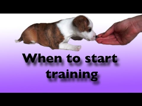 When to start training a dog- dog training clicker training