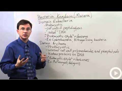 Bacteria Kingdom