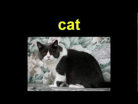 Animals ~  Learn English Vocabulary TESOL