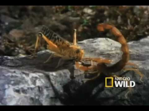 Innovative Scorpions
