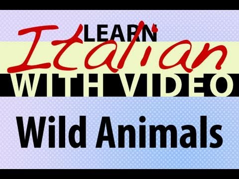 Learn Italian with Video - Wild Animals