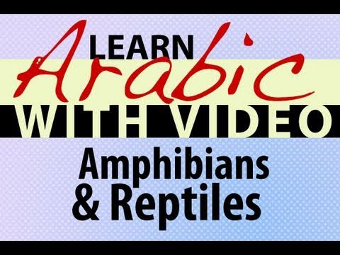 Learn Arabic with Video - Amphibians and Reptiles