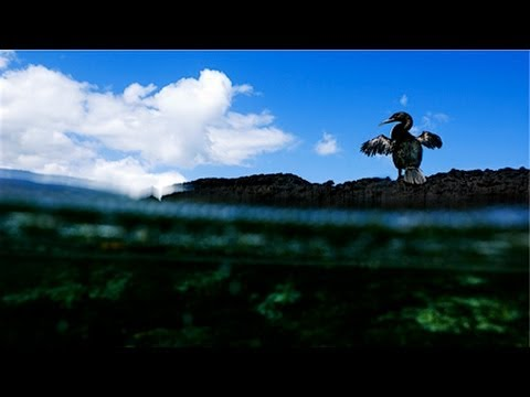 National Geographic Live! - Through the Eyes of a Critic: Photographing Galápagos