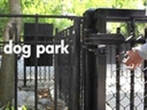 Dog Park: An Original Web Series