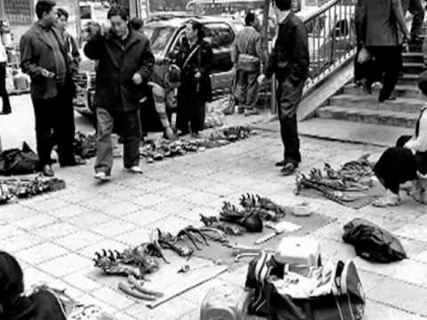 Black Market Animal Trade.wmv