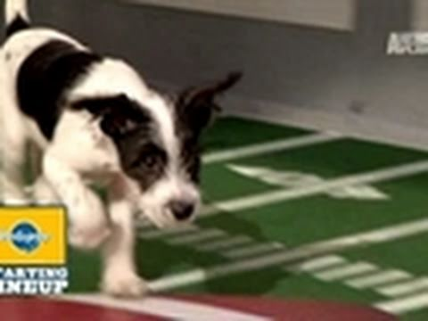 Puppy Bowl- 2011 Starting Lineup