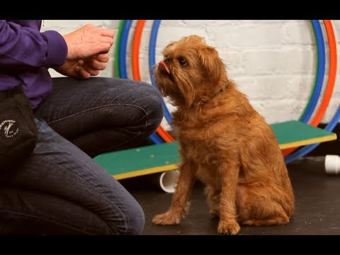 Dog Training: How to Teach Your Dog to Stay