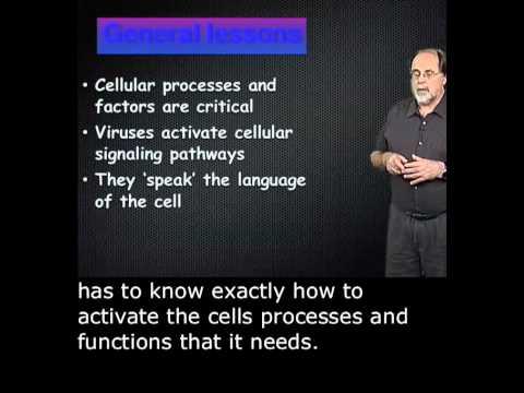 Ari Helenius Part 1: Virus entry with English Subtitles