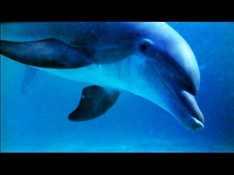 World's Weirdest - Dolphin Talk Decoded