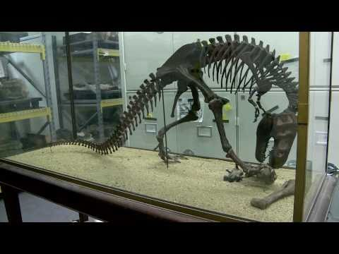 Inside the Collections: Paleontology and the Big Bone Room