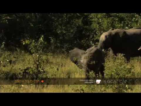 Elephant cow pushes calf away
