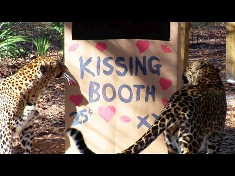 Leopard Kissing Booth! xoxo