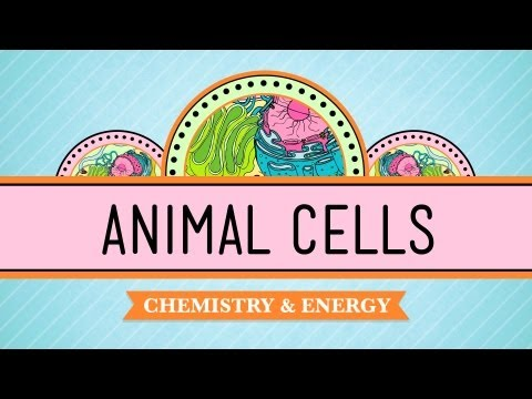 Eukaryopolis - The City of Animal Cells: Biology #4
