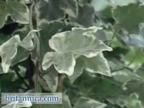 Plants: Photosynthesis