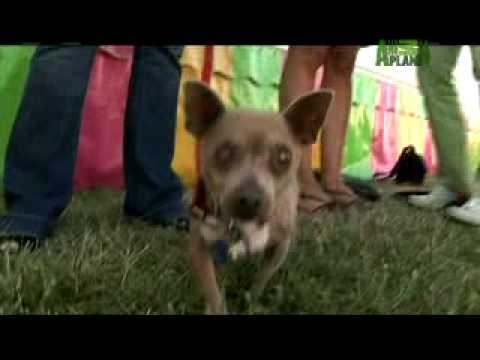 World's Ugliest Dog - Meet Xino