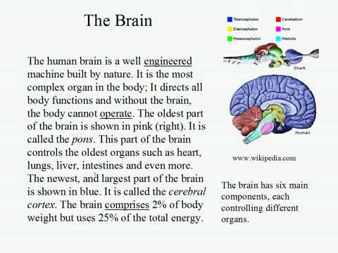 Live Intermediate English Lesson 16: Mental Power 1: The Brain