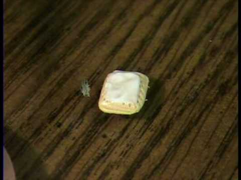 Pop Tart How to make in polymer clay for mini Doll house by Garden of imagination