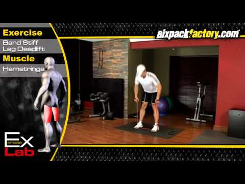 Stiff Leg Deadlift with Band : Best Hamstring Exercises