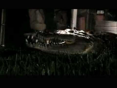 Crocodile Feeding Frenzy - Croc Bait