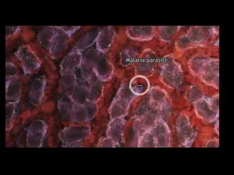TEDxSydney - Drew Berry - Astonishing Molecular Machines