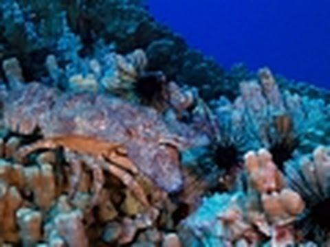 Marine Life Paradise