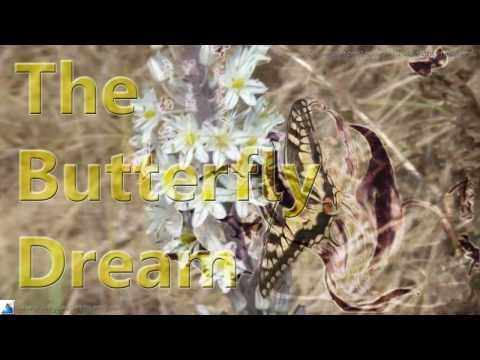 Chasing Butterflies | Learn English | Interesting!