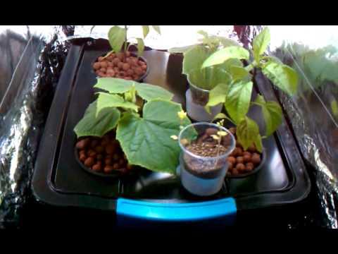 Hydroponic indoor herb garden UPDATE WK 4