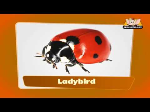 Flashcards for kids - Insects