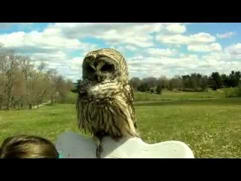 my Barred owl and daughter