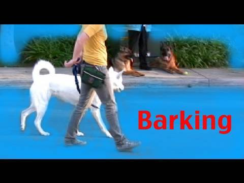Barking- Episode 3 - barking on a walk -dog training