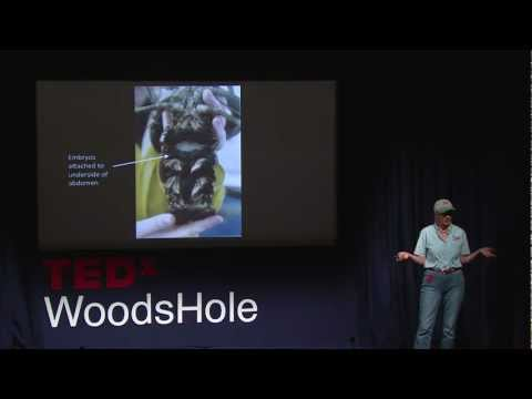 Diane Cowan - TEDxWoodsHole - Sustaining a Fishery and a Way of Life.