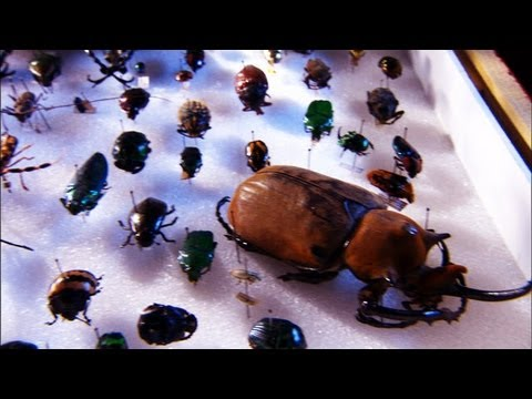 Forensic Firsts - Investigating Insects and Alibis