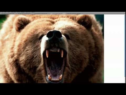 Grizzly Kills Man in Yellowstone