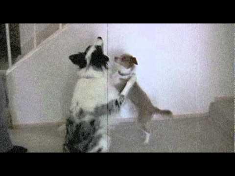 Two Dogs Hug- dog tricks