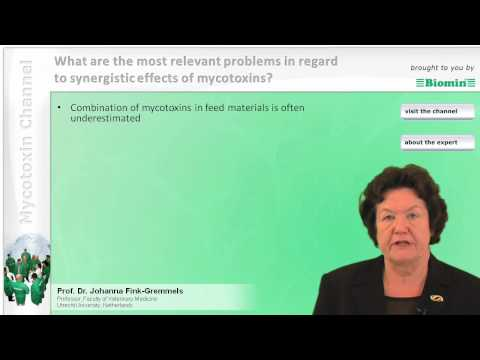 What are the most relevant problems in regard to synergistic effects of mycotoxins?
