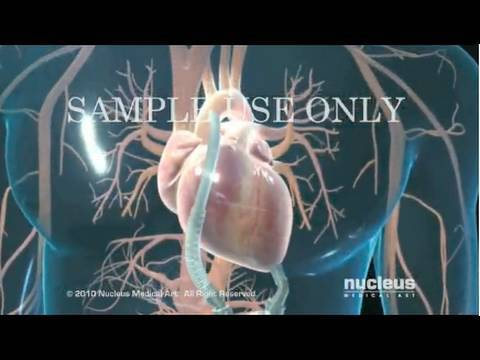 Heart Animations - Nucleus