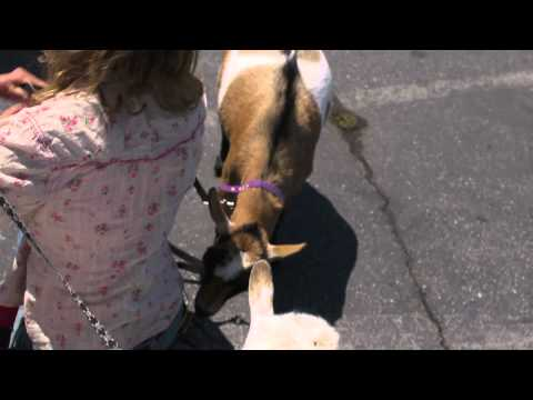 Maker Faire Goat Eats Microphone