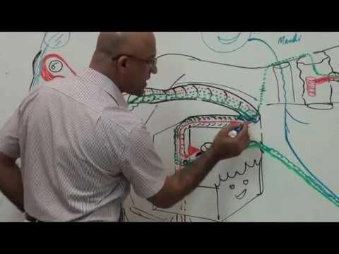 Facial Nerve 4/4 - Neuroanatomy