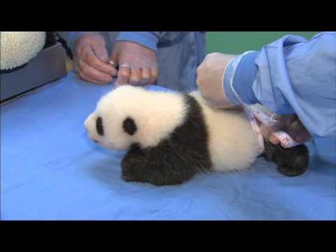 Panda Cub 3rd Exam