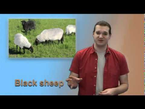 "Express Yourself #26 ""Black sheep"""