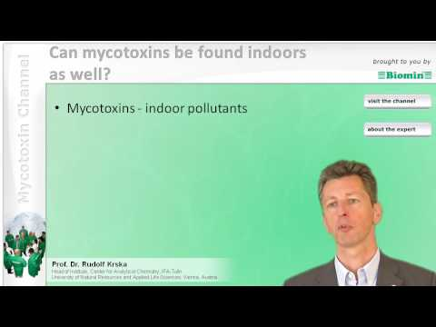 Can mycotoxins be found indoors as well?