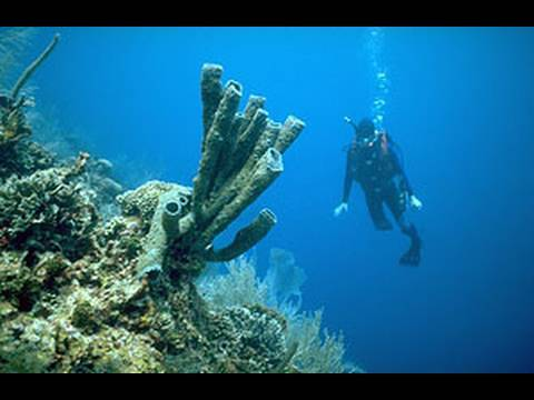 Scuba Science 2 - Shoulders and Nature: A Fragile Alliance in Underwater Science
